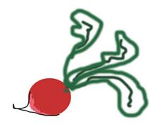 radish doodle.jpg